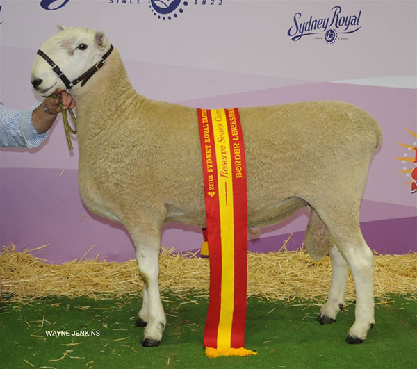 2013-SYDNEY-ROYAL-SHOW-RESERVE-SENIOR-CHAMPION.JPG