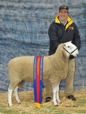 2014 BENDIGO SHEEP N WOOL 098  RET.JPG