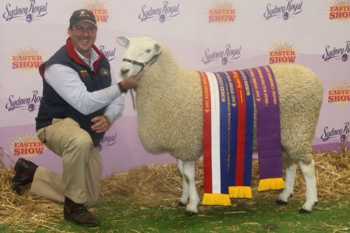 GRAND CHAMPION RAM SYDNEY ROYAL 2017.JPG