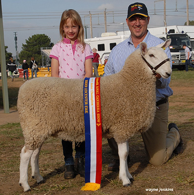 WATTLE_FARM_JUNIOR_CHAMPION_EWE_CANBERRA-2014.JPG