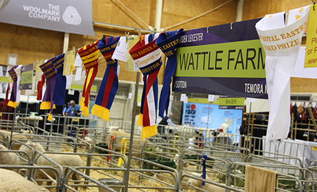 Wattle_Farm_Sydney_Royal_2014