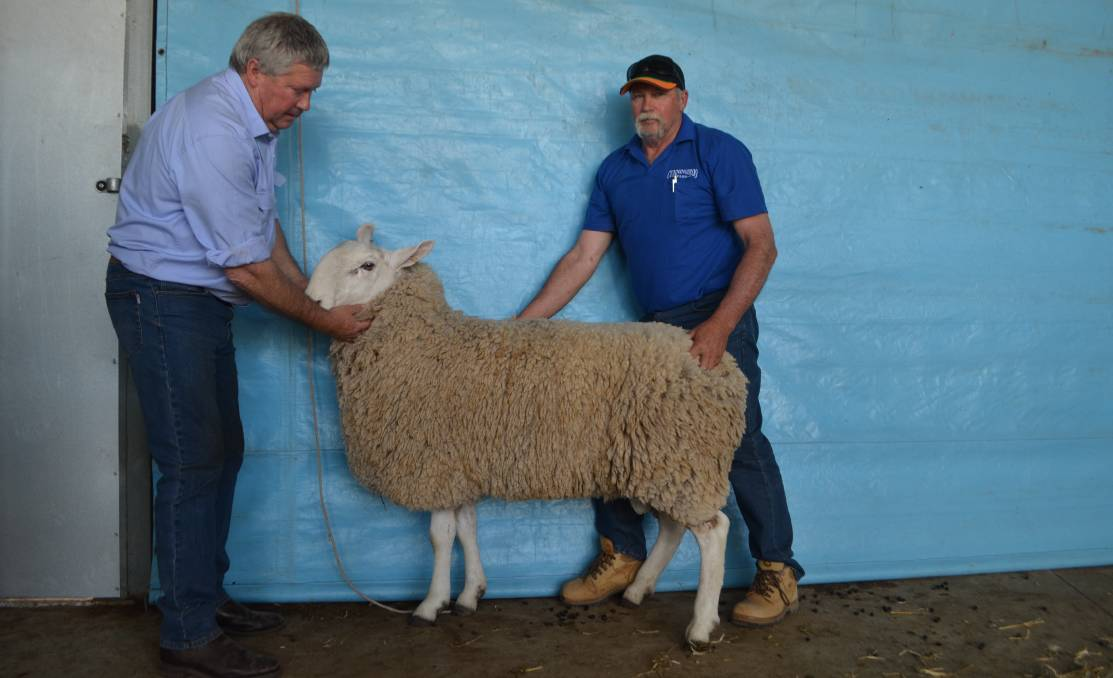 Border Leicester rams, ewes and first cross ewes for sale - Wattle